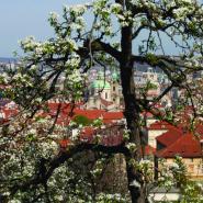 Pohled z Petřína, Praha