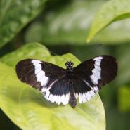 Motýly / Butterfly