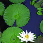 Krásy přírody / Nature Photo