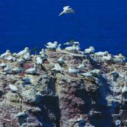 Ostrov Hengoland